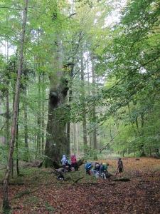 141008_Hergersdorf Wald (7)